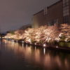 岡崎琵琶湖疎水の桜並木