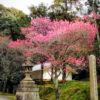 東福寺の涅槃会