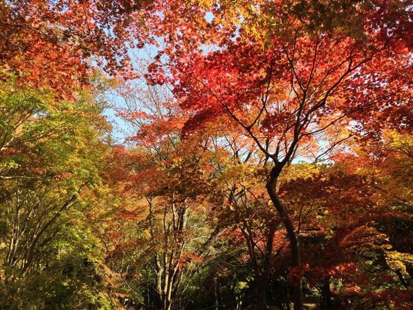 笠置寺は紅葉の穴場