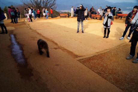 外人さんに大人気となっています岩田山モンキーパーク
