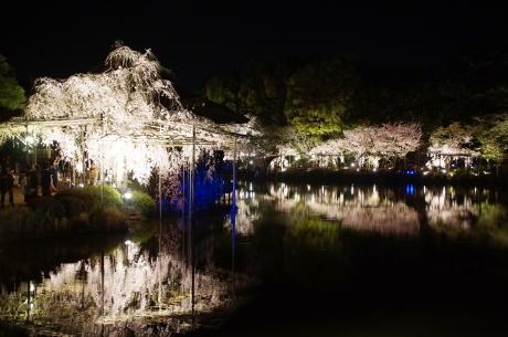 平安神宮のライトアップ「紅しだれコンサート2016」