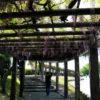 京都の藤の花 見どころ