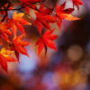 京都紅葉の見どころを一気にご紹介 素敵度128%