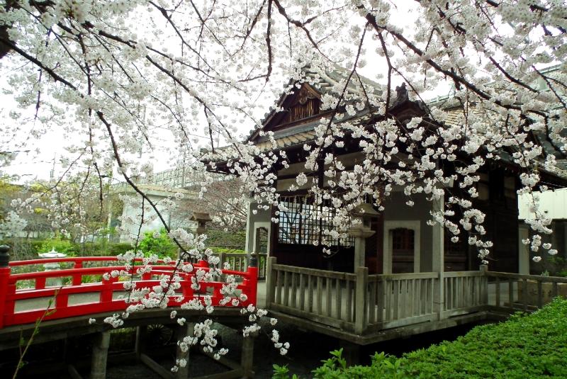 六孫王神社|桜の穴場&名所
