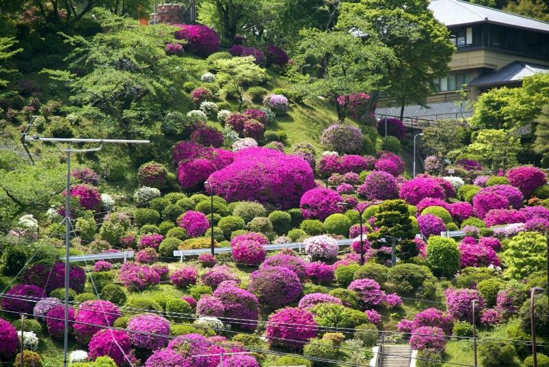 京都 青もみじを楽しむ京都の新緑